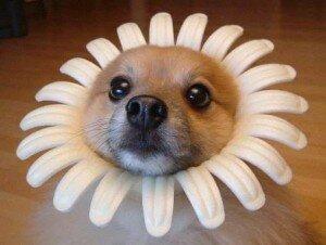собака в ромашке