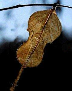 Осень и музыка для души